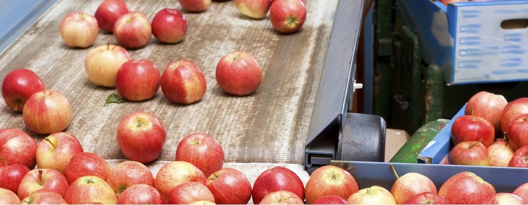 Rubro Elaboracion y Packing Fruta